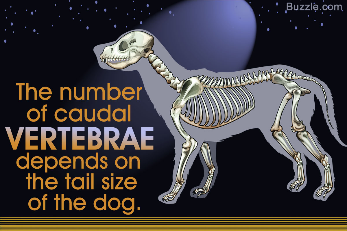 A Visual Guide To Understanding Dog Anatomy With Labeled Manual Guide