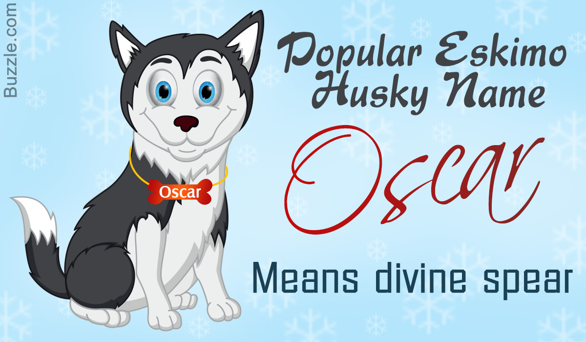 A List Of The Most Popular Eskimo Husky Names And Their Meanings Dogappy