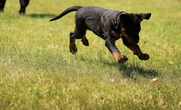 How to dog training guides lead to smart puppies.