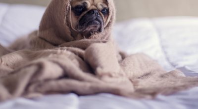 Puppy vaginitis can cause discomfort for your pooch.