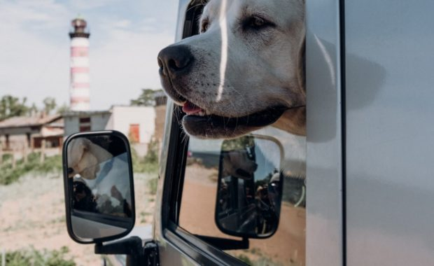 Dog sticking its head out a car window.