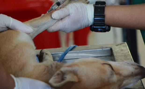 Dog treats salmonella can make your dog sick.