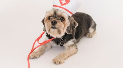 dog wearing nurse hat