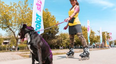 Athletic dog walking with lady on rollerblades